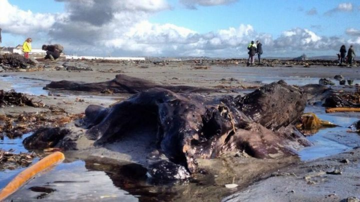 Ancient Forests Revealed In Sand Of Cornwall Beaches