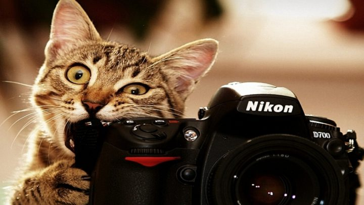 Pictures Of Cats More Popular Than Selfies