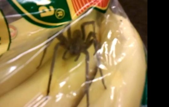 Family Called In Pest Control After Finding Spiders In A