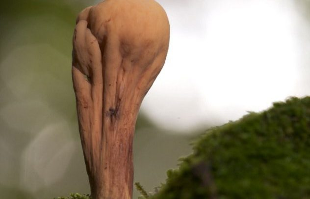 Nature's Magic: Champignon Resembles FIFA Trophy
