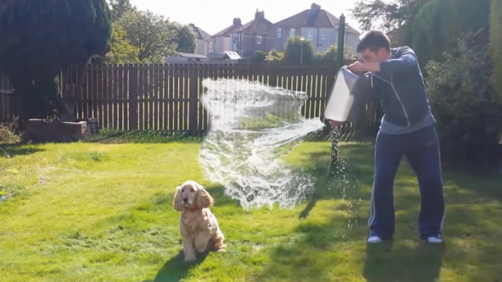 Owner Sets His Dog Up For Ice Bucket Challenge. What Happens Next Will Amaze You!