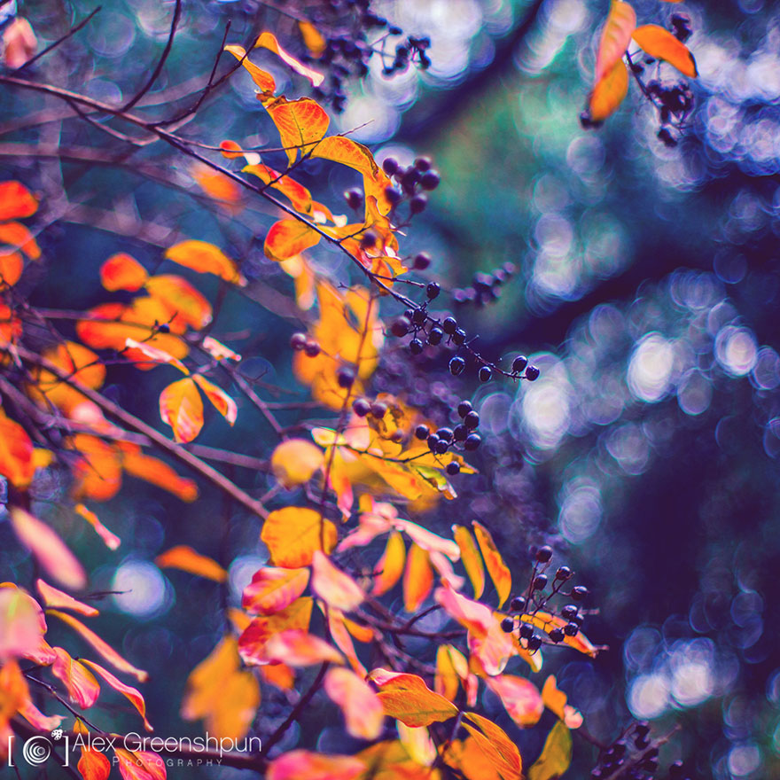 autumn-photography-alex-greenshpun-18