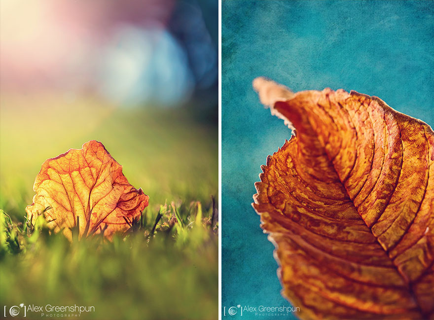 autumn-photography-alex-greenshpun-25_2