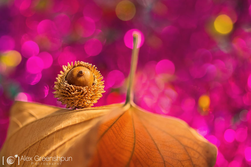 autumn-photography-alex-greenshpun-3