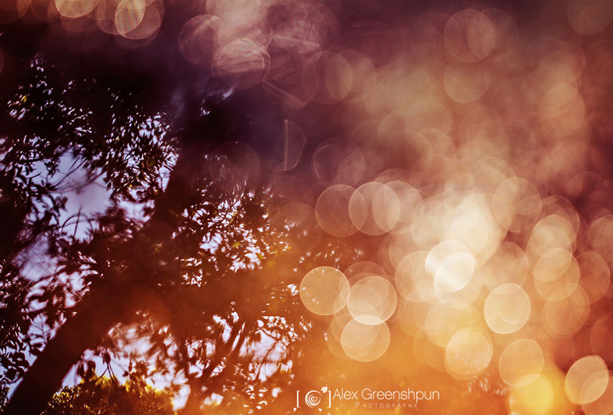 autumn-photography-alex-greenshpun-4