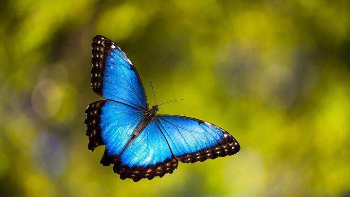 A New Life and Beautiful Transformation from Caterpillar to Butterflies