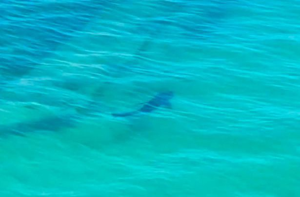 Giant Shark Spotted Off Cornwall Coast Swimming Close To Kids Playing In Sea