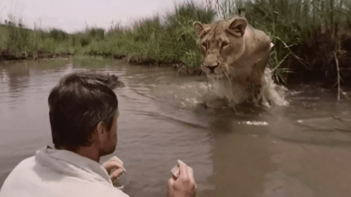 Amazing Footage Shows Man Hug & Play With Lions He Saved As Cubs