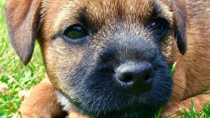 Everyone Is Removing Their Dogs Collars Indoors After A 5 Month Old Puppy Called Rocco Hung Himself On a Kitchen Door Handle