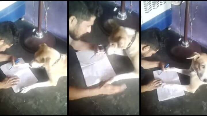 Man Filmed Trying To Teach His Dog The Alphabet & Beating It When It Gets It Wrong