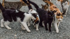 Briton dies from rabies after being bit by feral cat