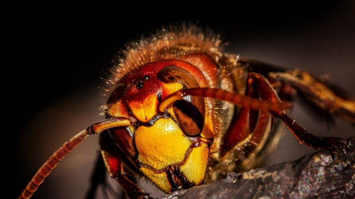 Terrifying newly discovered wasp turns spiders into zombies
