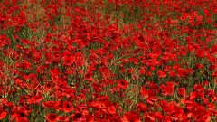 100 years of Armistice day, parades and services around Cornwall