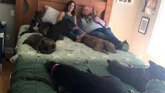 A Couple Create 'Mega Bed' So All 8 Rescue Dogs Can Sleep With Them
