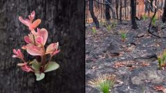 These Photos Tell A Story: How Australian Bush Is Beginning To Rejuvenate After Wildfires